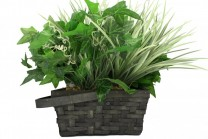 Xtreme Life House Plant Hidden Camera with Built-in WiFi